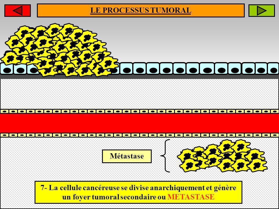 LE PROCESSUS TUMORAL Métastase 7- La cellule cancéreuse se divise anarchiquement et génère un foyer tumoral secondaire ou METASTASE