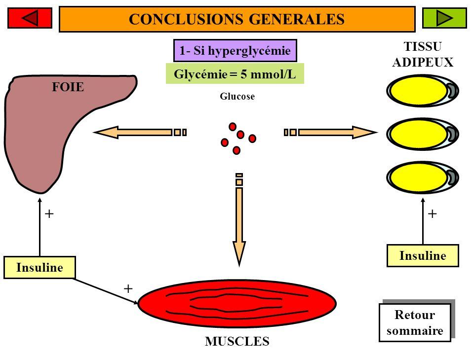 FOIE MUSCLES TISSU ADIPEUX CONCLUSIONS GENERALES Glycémie > 5 mmol/L Glycémie = 5 mmol/L 1- Si hyperglycémie Glucose Insuline + + + Retour sommaire Retour sommaire