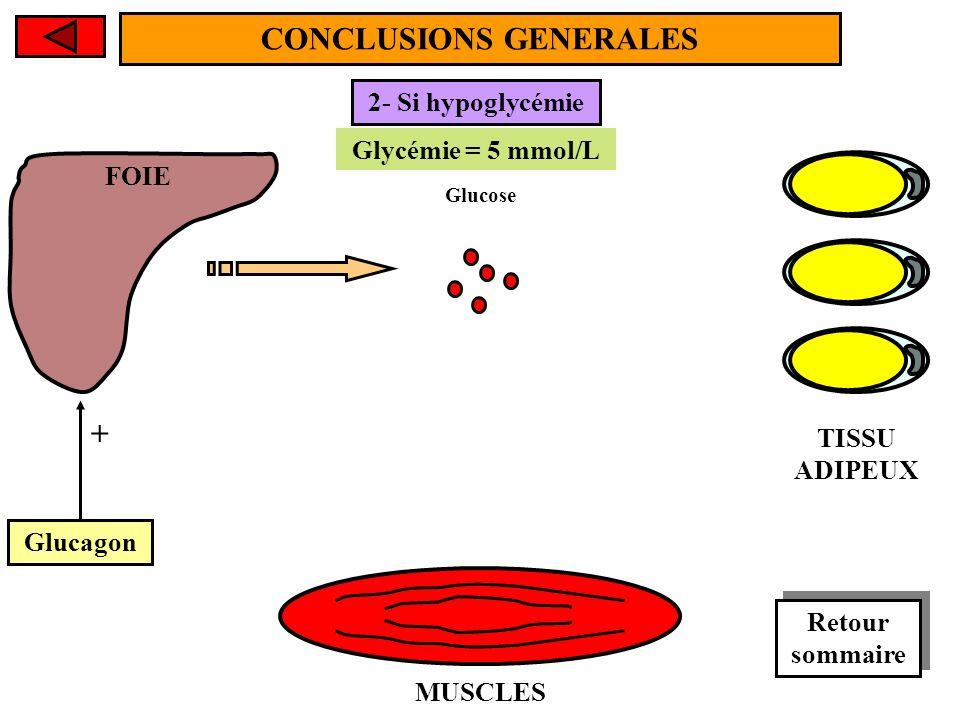 FOIE MUSCLES TISSU ADIPEUX CONCLUSIONS GENERALES Glycémie < 5 mmol/L Glycémie = 5 mmol/L 2- Si hypoglycémie Glucose Glucagon + Retour sommaire Retour sommaire