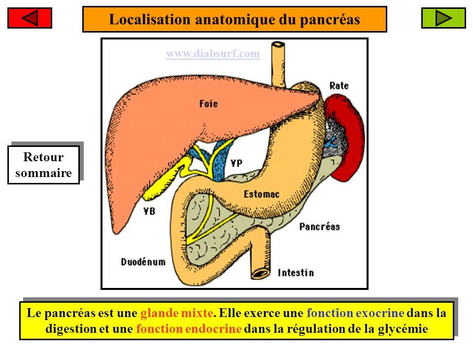 Localisation anatomique du pancréas Le pancréas est une glande mixte. Elle exerce une fonction exocrine dans la digestion et une fonction endocrine da