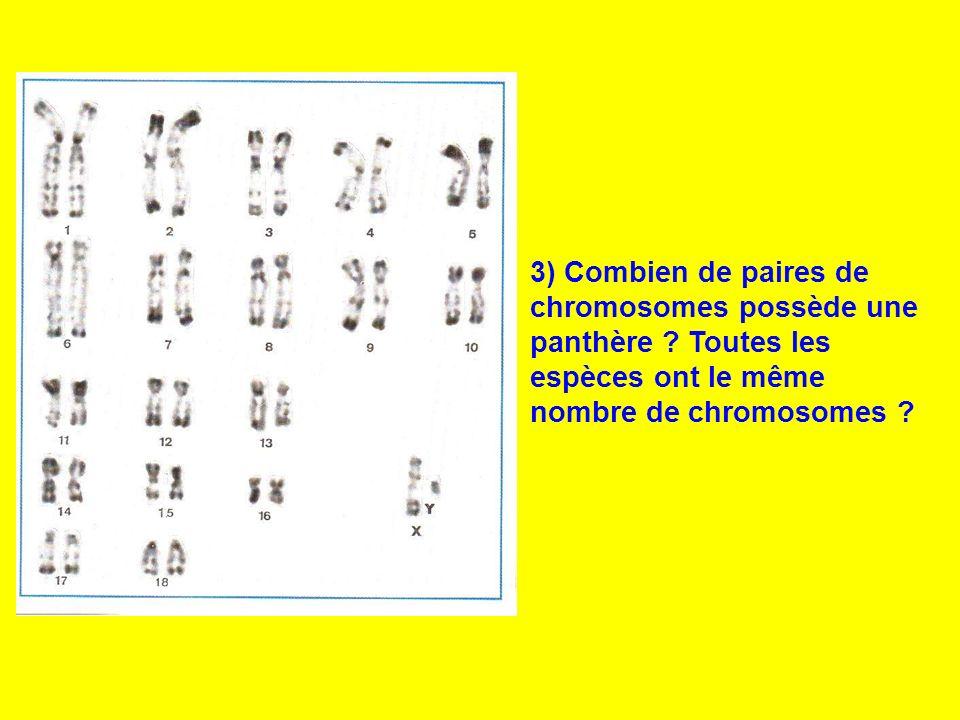3) Combien de paires de chromosomes possède une panthère ? Toutes les espèces ont le même nombre de chromosomes ?