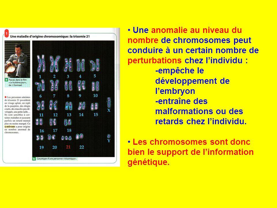 Une anomalie au niveau du nombre de chromosomes peut conduire à un certain nombre de perturbations chez lindividu : -empêche le développement de lembr
