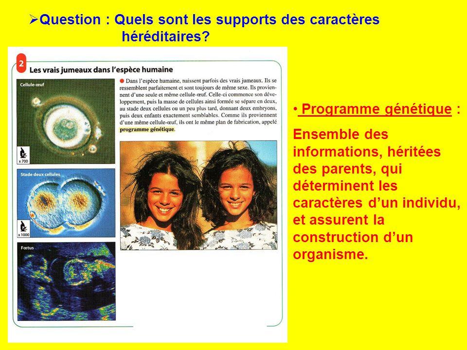 Question : Quels sont les supports des caractères héréditaires? Programme génétique : Ensemble des informations, héritées des parents, qui déterminent