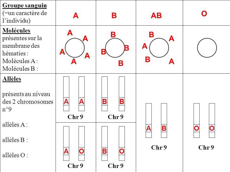 Chr 9 Allèles présents au niveau des 2 chromosomes n°9 allèles A : allèles B : allèles O : Molécules présentes sur la membrane des hématies : Molécule