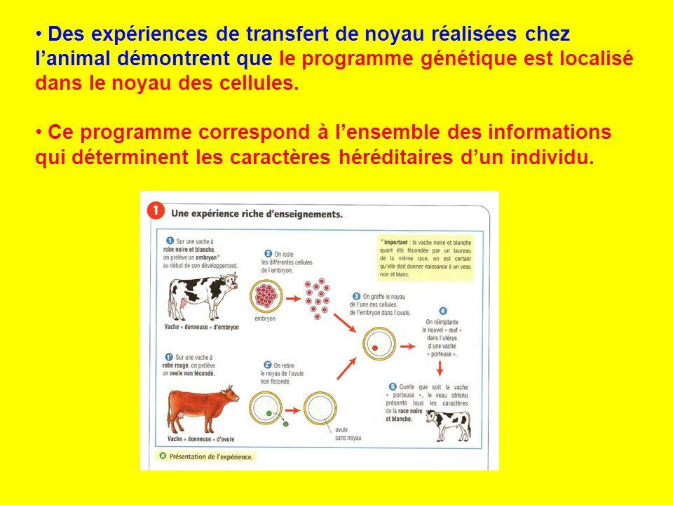 Des expériences de transfert de noyau réalisées chez lanimal démontrent que le programme génétique est localisé dans le noyau des cellules. Ce program