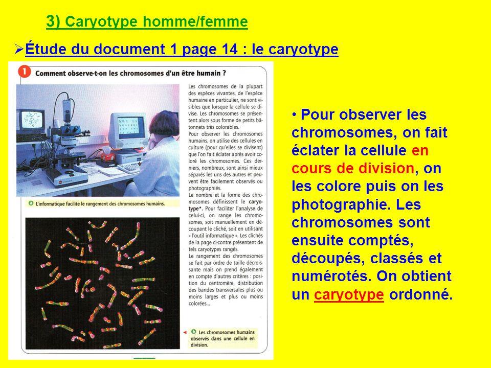 3) Caryotype homme/femme Étude du document 1 page 14 : le caryotype Pour observer les chromosomes, on fait éclater la cellule en cours de division, on
