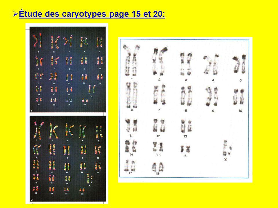 1) Combien de paires de chromosomes possède un individu .