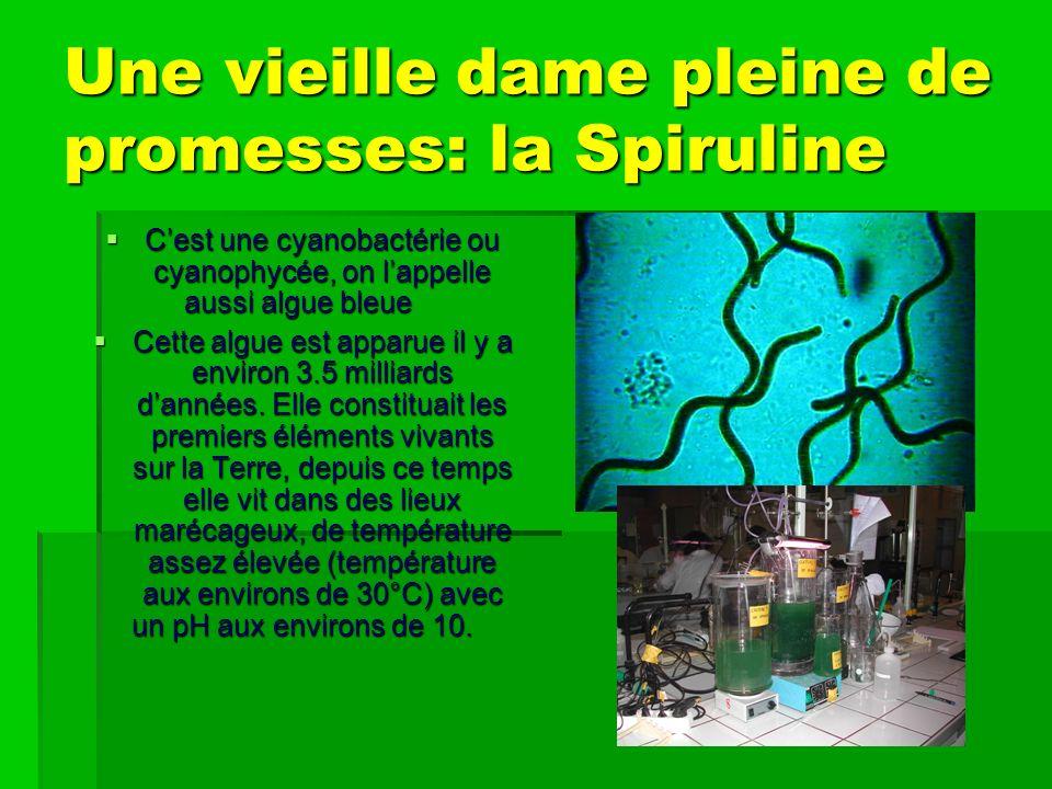 Une vieille dame pleine de promesses: la Spiruline Cest une cyanobactérie ou cyanophycée, on lappelle aussi algue bleue Cest une cyanobactérie ou cyanophycée, on lappelle aussi algue bleue Cette algue est apparue il y a environ 3.5 milliards dannées.