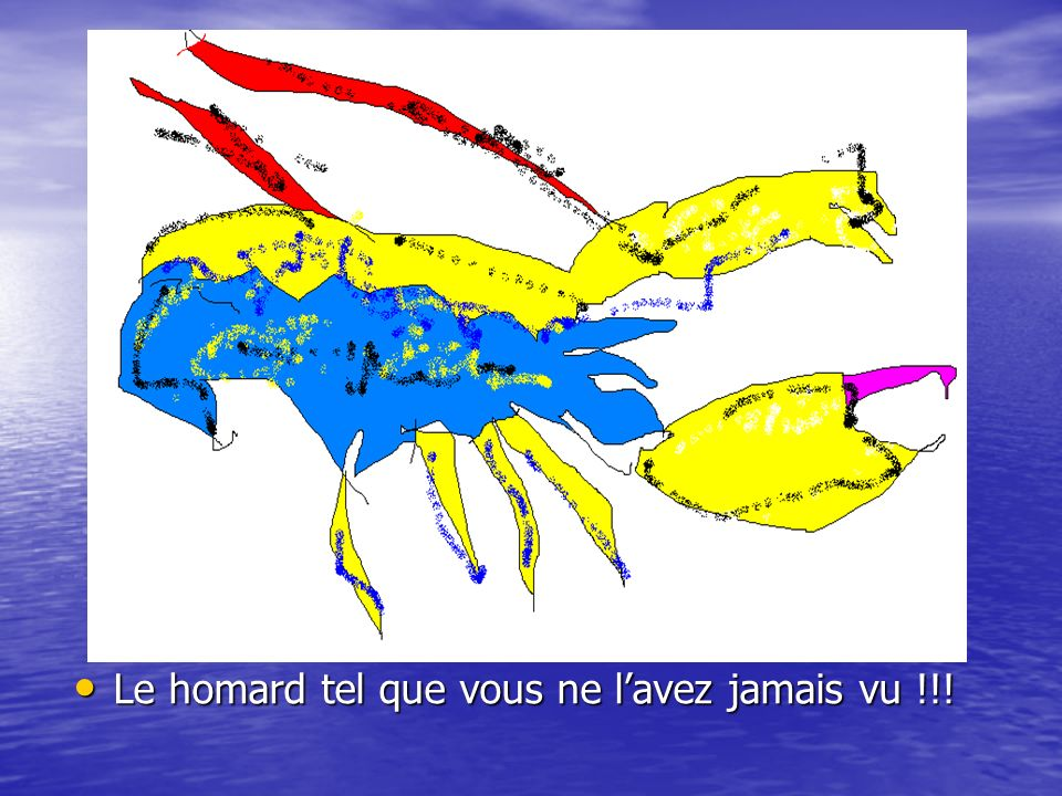 Le homard tel que vous ne lavez jamais vu !!! Le homard tel que vous ne lavez jamais vu !!!