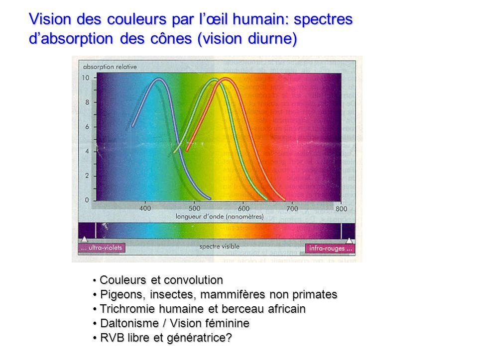 Vision et résolution Œil humain: pouvoir séparateur de 1.E-4 rad environ Écran de PC / station: 1280x1024 points, écran de 60 cm vu à 70 cm 7.E-4 rad Projecteur RVB: 1024x768 points, écran de 2 m vu à 7 m 3.E-4 rad Mammifères Œil du condor