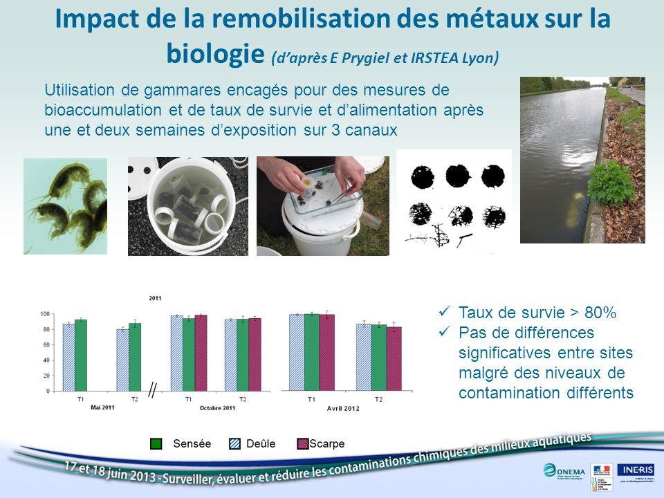 Impact de la remobilisation des métaux sur la biologie (daprès E Prygiel et IRSTEA Lyon) Utilisation de gammares encagés pour des mesures de bioaccumu