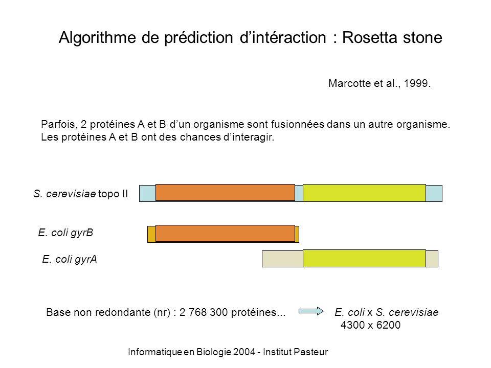 Informatique en Biologie 2004 - Institut Pasteur Algorithme de prédiction dintéraction : Rosetta stone query_file my_db pb formatdb look for pairs rosetta pairs history une ligne par paire : concatenation de 2 lignes de la sortie Blast : historique de lassociation en paire.
