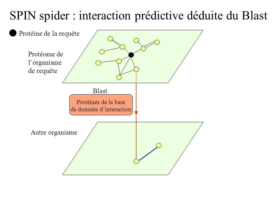 SPIN spider : interaction prédictive déduite du Blast Protéine de la requête Protéome de lorganisme de requête Autre organisme Blast Protéines de la b