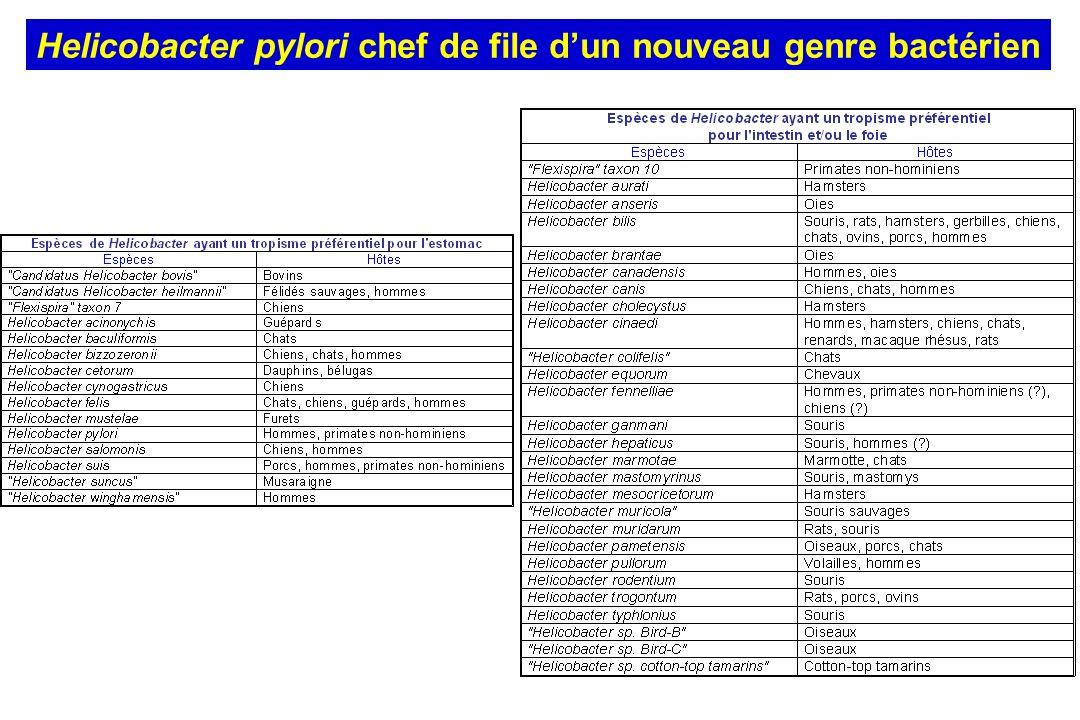 Uemura et al.N. Engl. J. Med. (2001) Sur les 280 patients non-infectés par H.