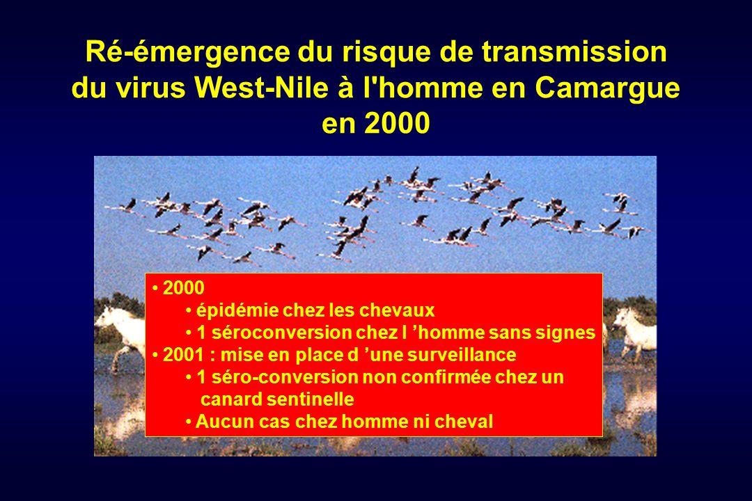 Ré-émergence du risque de transmission du virus West-Nile à l'homme en Camargue en 2000 2000 épidémie chez les chevaux 1 séroconversion chez l homme s