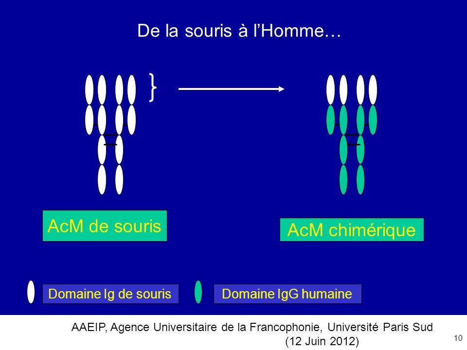 AAEIP, Agence Universitaire de la Francophonie, Université Paris Sud (12 Juin 2012) 10 De la souris à lHomme… Domaine Ig de sourisDomaine IgG humaine