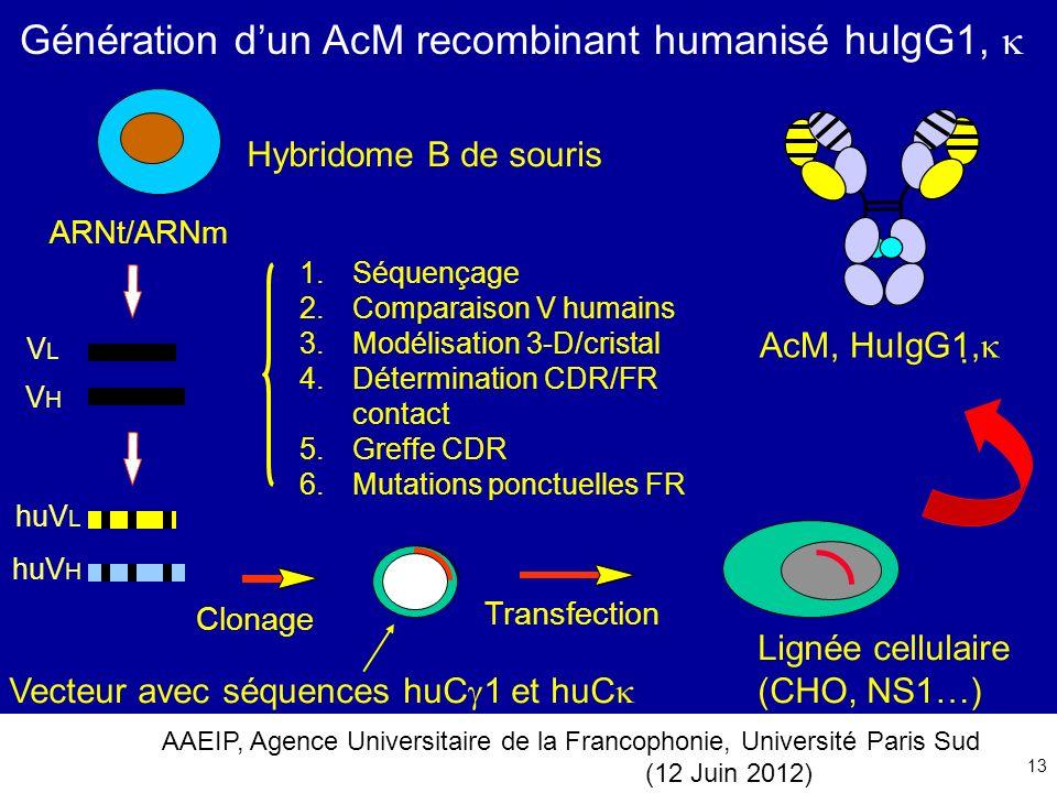 AAEIP, Agence Universitaire de la Francophonie, Université Paris Sud (12 Juin 2012) 13 Génération dun AcM recombinant humanisé huIgG1, Vecteur avec sé
