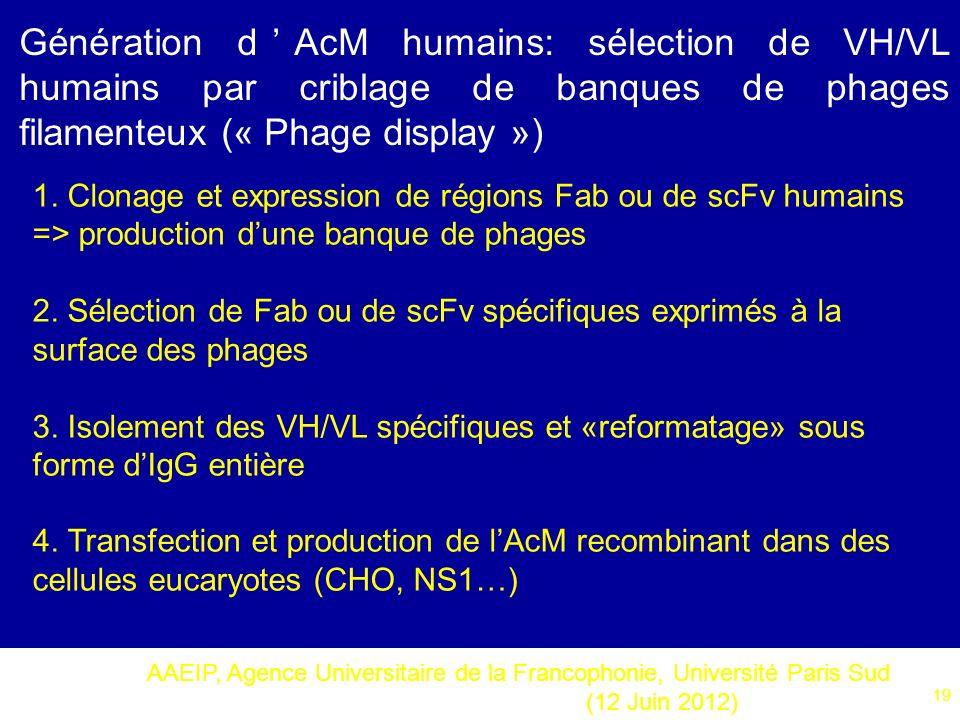 AAEIP, Agence Universitaire de la Francophonie, Université Paris Sud (12 Juin 2012) 19 Génération dAcM humains: sélection de VH/VL humains par criblag