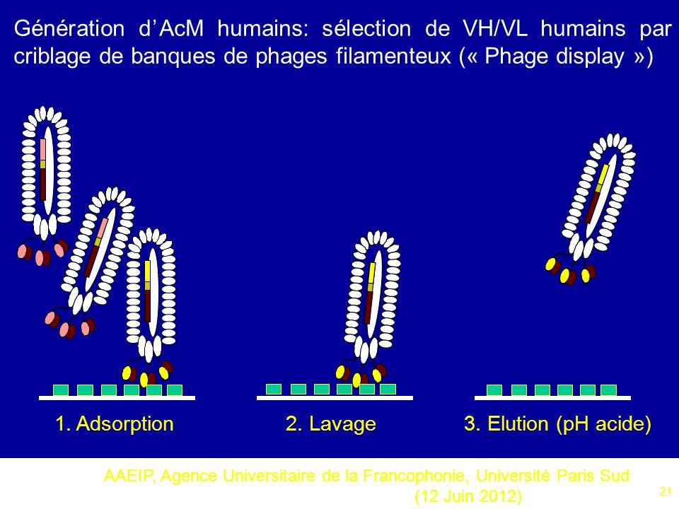 AAEIP, Agence Universitaire de la Francophonie, Université Paris Sud (12 Juin 2012) 21 Génération dAcM humains: sélection de VH/VL humains par criblag