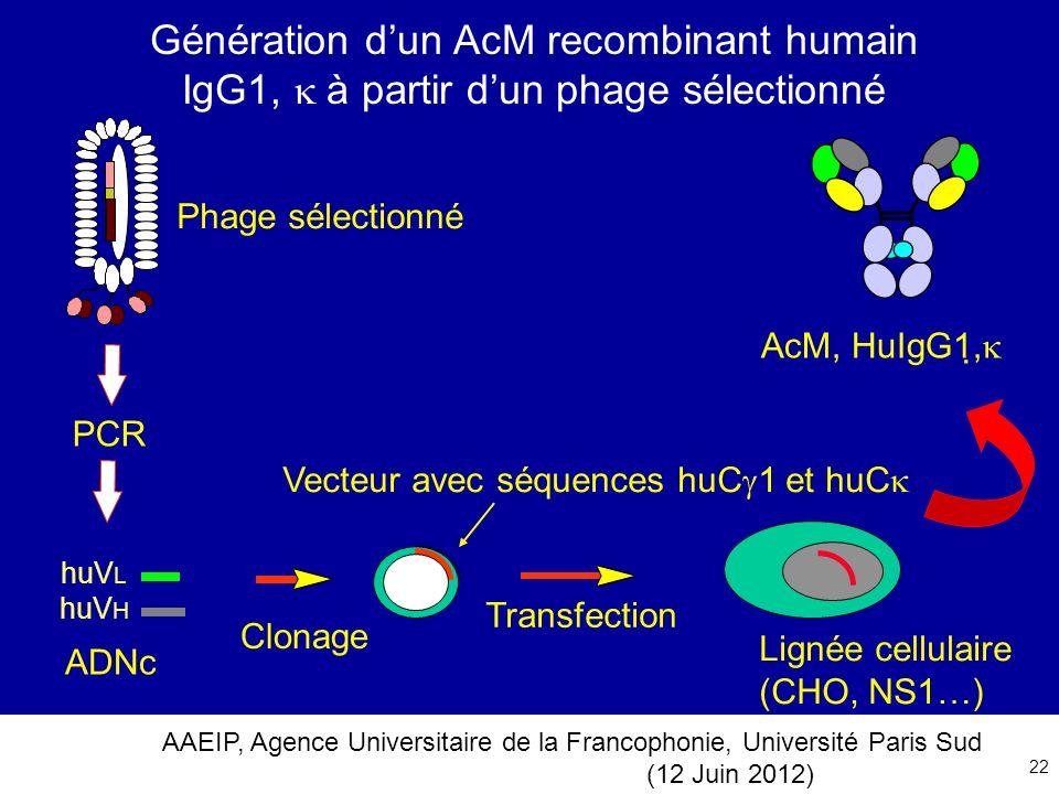 AAEIP, Agence Universitaire de la Francophonie, Université Paris Sud (12 Juin 2012) 22 Génération dun AcM recombinant humain IgG1, à partir dun phage