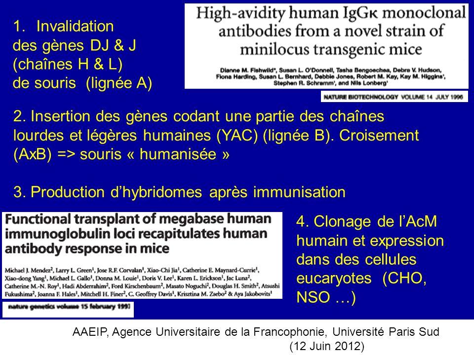 AAEIP, Agence Universitaire de la Francophonie, Université Paris Sud (12 Juin 2012) 2. Insertion des gènes codant une partie des chaînes lourdes et lé