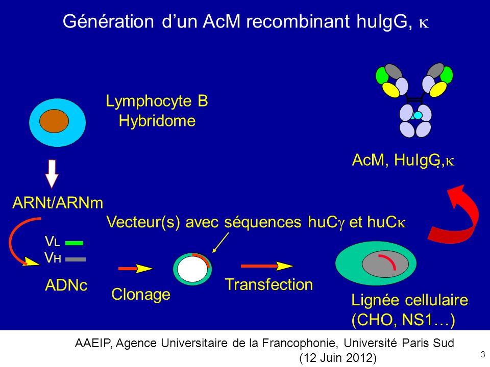 AAEIP, Agence Universitaire de la Francophonie, Université Paris Sud (12 Juin 2012) 3 Génération dun AcM recombinant huIgG, Vecteur(s) avec séquences