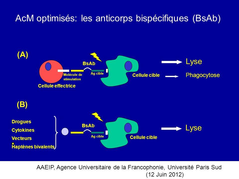 AAEIP, Agence Universitaire de la Francophonie, Université Paris Sud (12 Juin 2012) AcM optimisés: les anticorps bispécifiques (BsAb) Ag cible Cellule