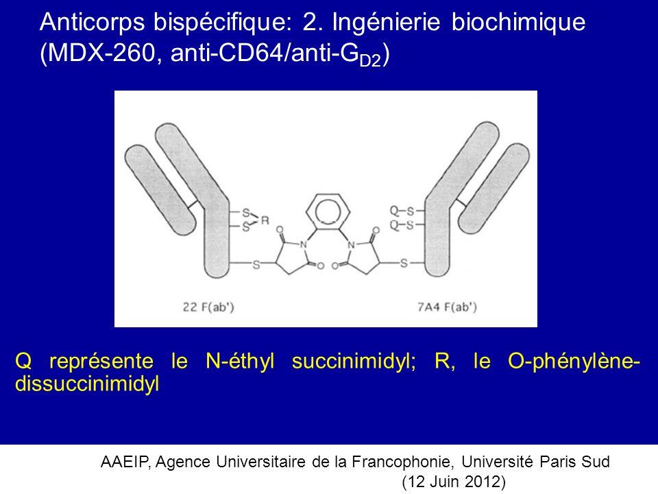 AAEIP, Agence Universitaire de la Francophonie, Université Paris Sud (12 Juin 2012) Anticorps bispécifique: 2. Ingénierie biochimique (MDX-260, anti-C
