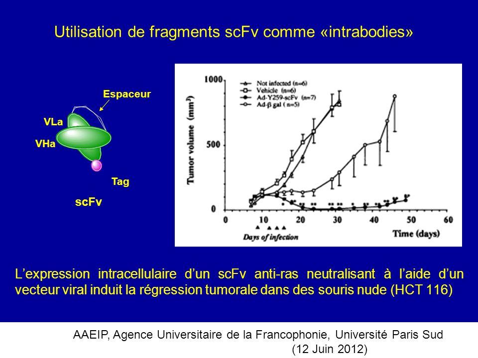 AAEIP, Agence Universitaire de la Francophonie, Université Paris Sud (12 Juin 2012) Lexpression intracellulaire dun scFv anti-ras neutralisant à laide