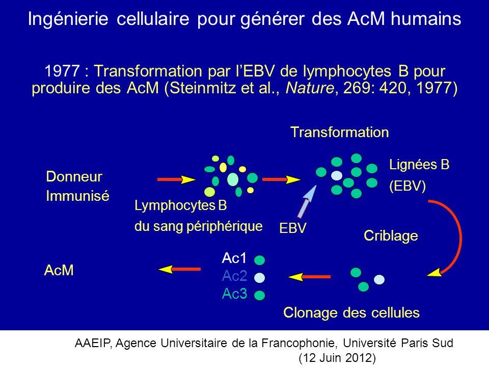 AAEIP, Agence Universitaire de la Francophonie, Université Paris Sud (12 Juin 2012) Ingénierie cellulaire pour générer des AcM humains 1977 : Transfor