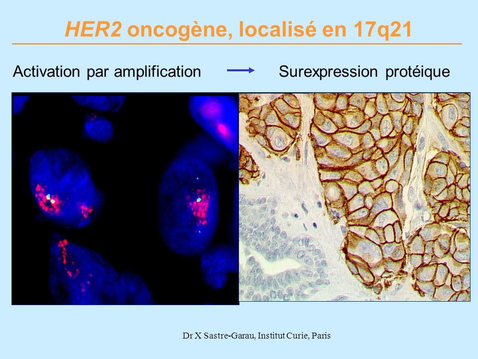 Dr X Sastre-Garau, Institut Curie, Paris Activation par amplification HER2 oncogène, localisé en 17q21 Surexpression protéique