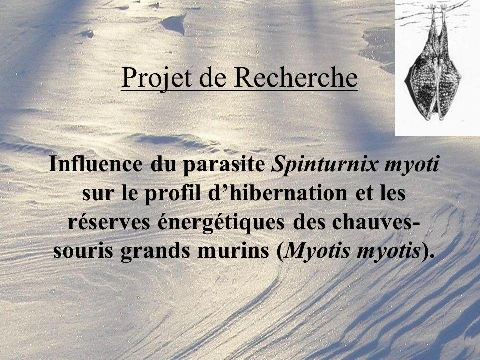 Influence du parasite Spinturnix myoti sur le profil dhibernation et les réserves énergétiques des chauves- souris grands murins (Myotis myotis).