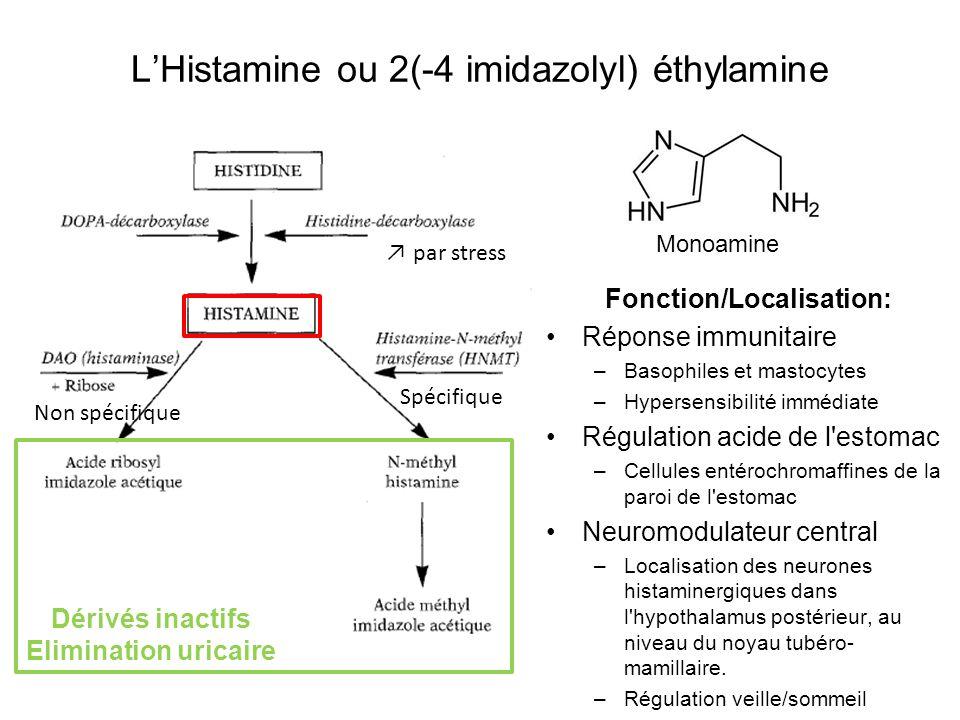 LHistamine ou 2(-4 imidazolyl) éthylamine Fonction/Localisation: Réponse immunitaire –Basophiles et mastocytes –Hypersensibilité immédiate Régulation acide de l estomac –Cellules entérochromaffines de la paroi de l estomac Neuromodulateur central –Localisation des neurones histaminergiques dans l hypothalamus postérieur, au niveau du noyau tubéro- mamillaire.