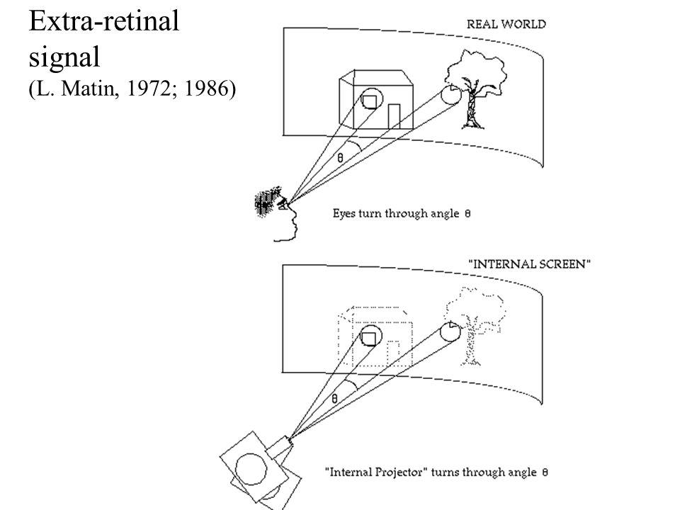 Master ENS 2004 - ORegan Extra-retinal signal (L. Matin, 1972; 1986)