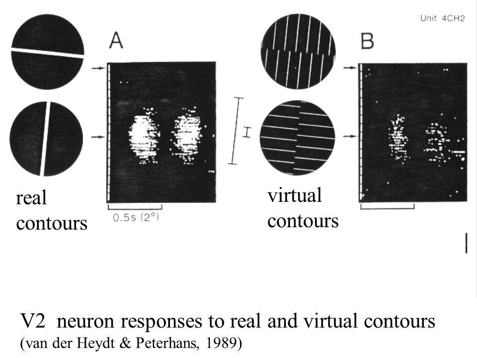 V2 neuron responses to real and virtual contours (van der Heydt & Peterhans, 1989) real contours virtual contours