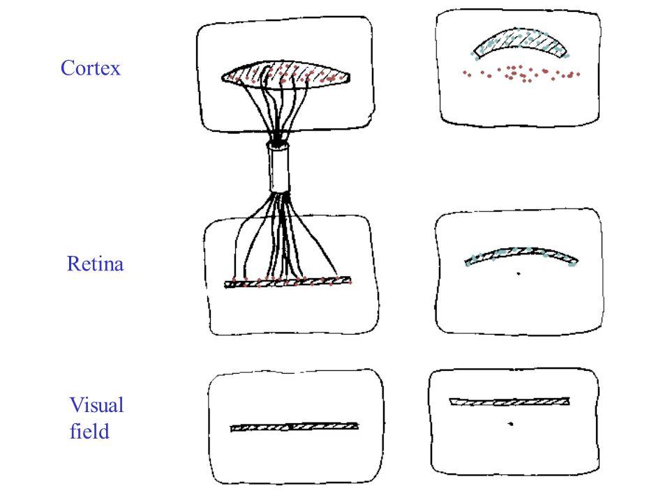 Cortex Retina Visual field