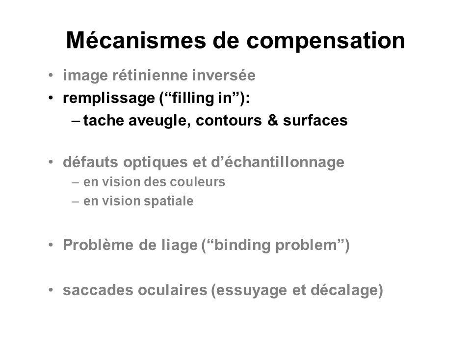 Mécanismes de compensation image rétinienne inversée remplissage (filling in): –tache aveugle, contours & surfaces défauts optiques et déchantillonnag