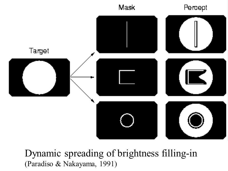 Dynamic spreading of brightness filling-in (Paradiso & Nakayama, 1991)