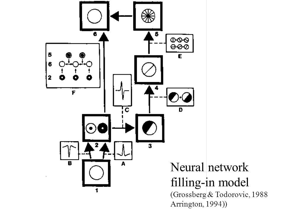 Neural network filling-in model (Grossberg & Todorovic, 1988 Arrington, 1994))