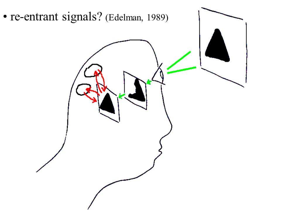 re-entrant signals? (Edelman, 1989)