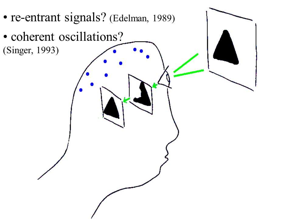coherent oscillations? (Singer, 1993) re-entrant signals? (Edelman, 1989)