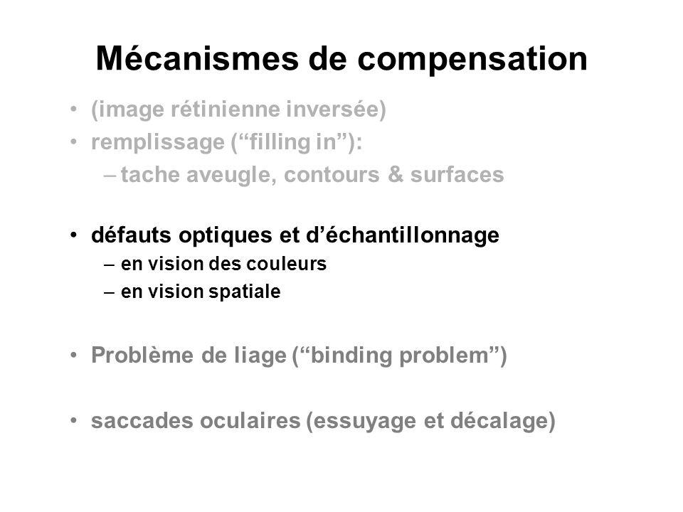 Mécanismes de compensation (image rétinienne inversée) remplissage (filling in): –tache aveugle, contours & surfaces défauts optiques et déchantillonn