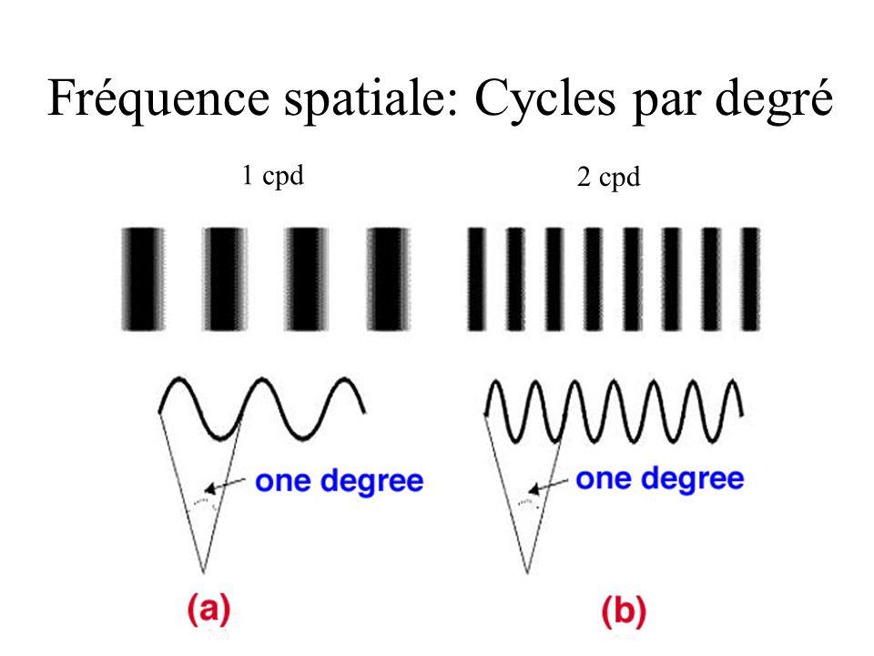 Fréquence spatiale: Cycles par degré 1 cpd 2 cpd