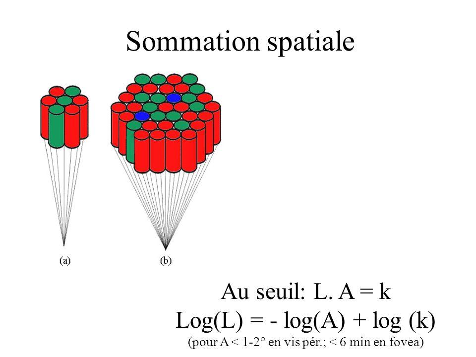 Sommation spatiale Au seuil: L. A = k Log(L) = - log(A) + log (k) (pour A < 1-2° en vis pér.; < 6 min en fovea)