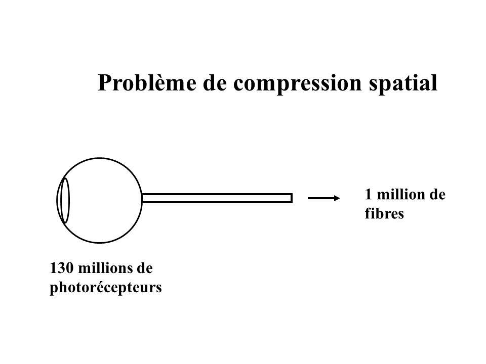130 millions de photorécepteurs 1 million de fibres Problème de compression spatial
