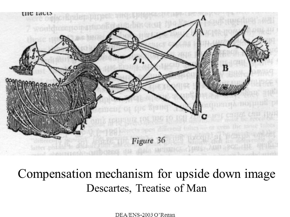 Compensation mechanism for upside down image Descartes, Treatise of Man