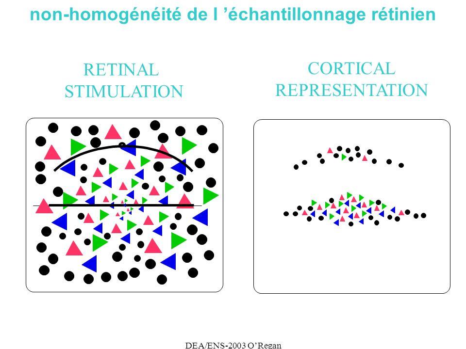 DEA/ENS-2003 ORegan non-homogénéité de l échantillonnage rétinien RETINAL STIMULATION CORTICAL REPRESENTATION