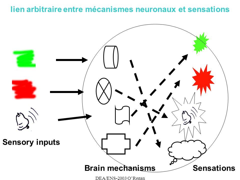 DEA/ENS-2003 ORegan lien arbitraire entre mécanismes neuronaux et sensations Brain mechanismsSensations Sensory inputs