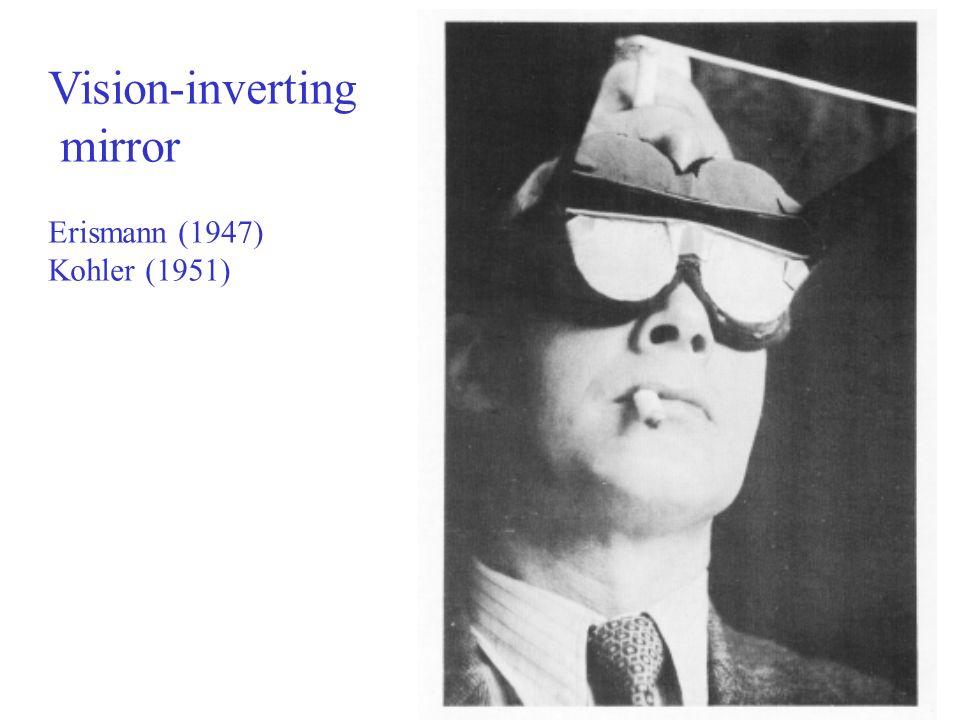 Vision-inverting mirror Erismann (1947) Kohler (1951)