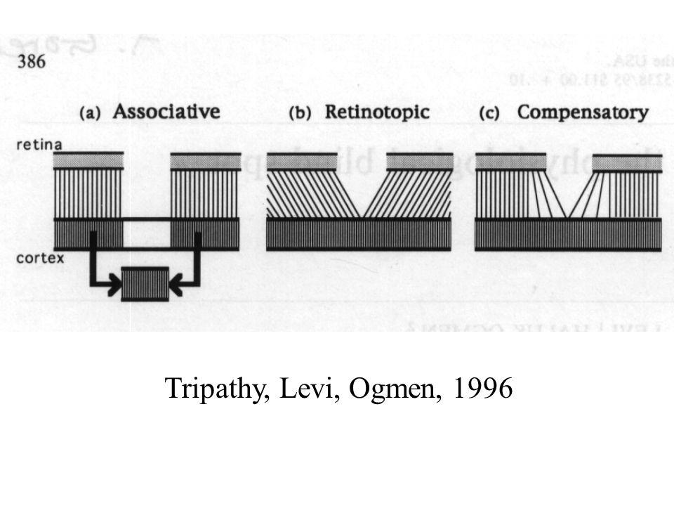 Tripathy, Levi, Ogmen, 1996